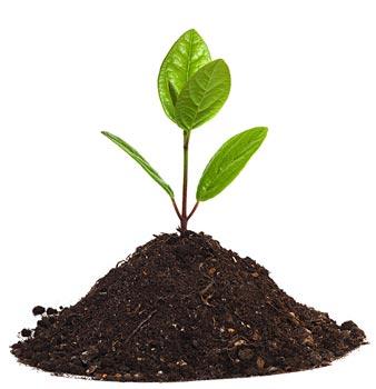 projekty ogrodów pomorskie szkółka drzew i krzewów pomorskie